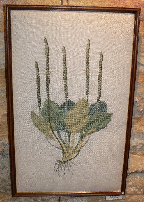 http://www.archive-host2.com/membres/images/1336321151/balades/gourdon/P_plantago.jpg
