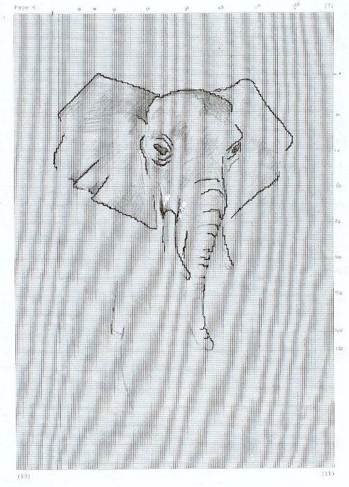 http://www.archive-host2.com/membres/images/1336321151/bestioles/elefan/elefan_lin/el_dessin.jpg