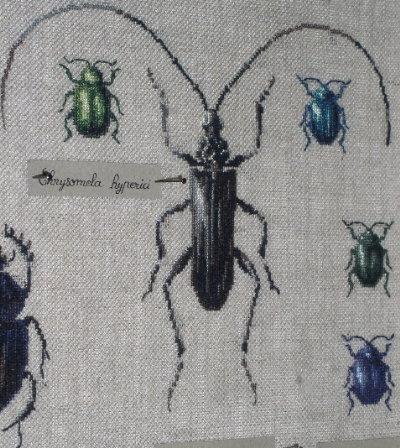 http://www.archive-host2.com/membres/images/1336321151/bestioles/insectes/capricorne/capricorne_boite.jpg