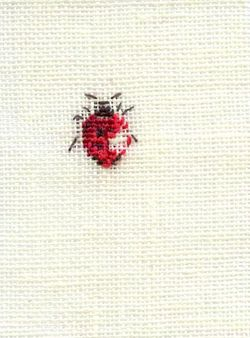 http://www.archive-host2.com/membres/images/1336321151/bestioles/insectes/coccis/2cooci2.jpg