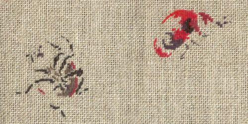 http://www.archive-host2.com/membres/images/1336321151/bestioles/insectes/coccis/etcocci3d1.jpg
