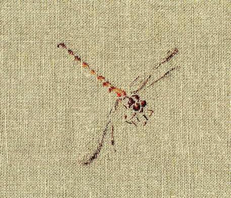 http://www.archive-host2.com/membres/images/1336321151/bestioles/insectes/libellule/libellule_AVAS.jpg