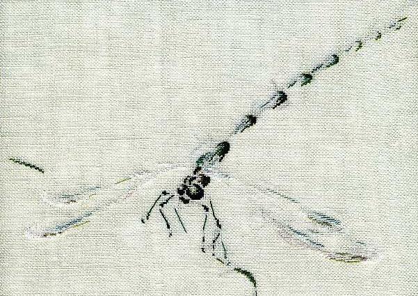 http://www.archive-host2.com/membres/images/1336321151/bestioles/insectes/libellule_C/fin.jpg