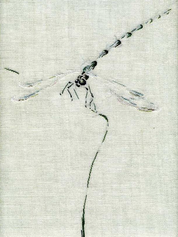 http://www.archive-host2.com/membres/images/1336321151/bestioles/insectes/libellule_C/fin_libellule.jpg