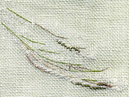 http://www.archive-host2.com/membres/images/1336321151/bestioles/insectes/libellule_C/l0_aile.jpg