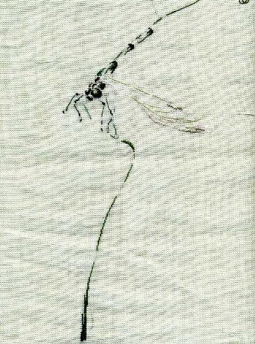 http://www.archive-host2.com/membres/images/1336321151/bestioles/insectes/libellule_C/l1.jpg