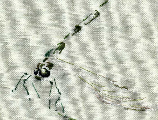 http://www.archive-host2.com/membres/images/1336321151/bestioles/insectes/libellule_C/l1_corps.jpg