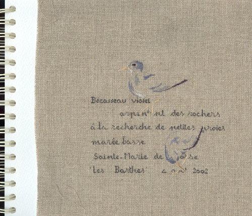 http://www.archive-host2.com/membres/images/1336321151/bestioles/oiseaux/becasse/becasseau_violet.jpg
