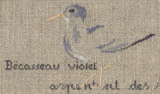http://www.archive-host2.com/membres/images/1336321151/bestioles/oiseaux/becasse/becasseau_violet_gp.jpg