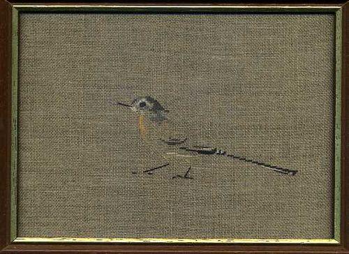 http://www.archive-host2.com/membres/images/1336321151/bestioles/oiseaux/bergeron/bergeronette_Ste-Marie.jpg