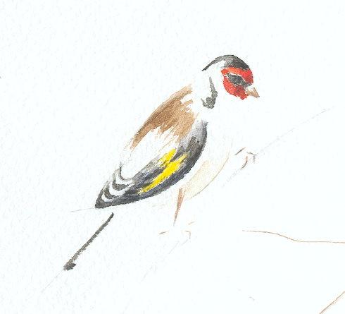 http://www.archive-host2.com/membres/images/1336321151/bestioles/oiseaux/chardonne/ch_ele_aqua.jpg