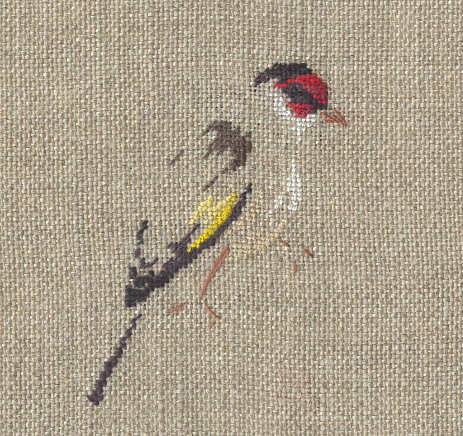 http://www.archive-host2.com/membres/images/1336321151/bestioles/oiseaux/chardonne/ch_ele_brod.jpg