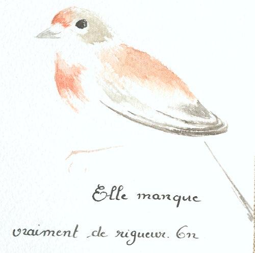 http://www.archive-host2.com/membres/images/1336321151/bestioles/oiseaux/linotte/linotte_aqua.jpg