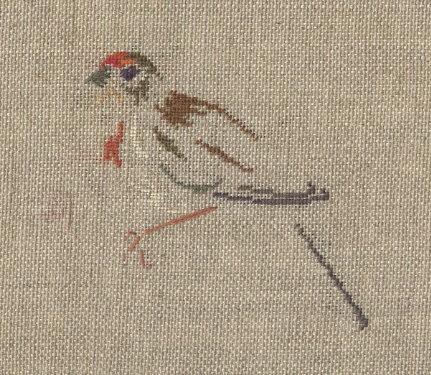 http://www.archive-host2.com/membres/images/1336321151/bestioles/oiseaux/linotte/linotte_brod.jpg
