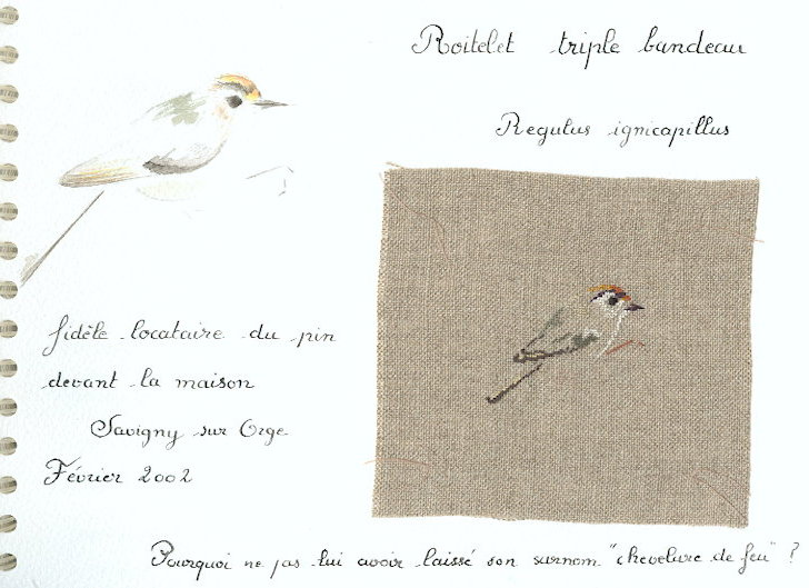 http://www.archive-host2.com/membres/images/1336321151/bestioles/oiseaux/roitelet/roitelettriplebandeau.jpg