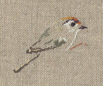 http://www.archive-host2.com/membres/images/1336321151/bestioles/oiseaux/roitelet/roitelettriplebandeau_brod.jpg