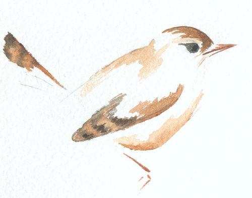 http://www.archive-host2.com/membres/images/1336321151/bestioles/oiseaux/troglo/tro-aqua.jpg