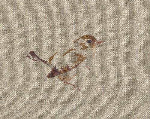 http://www.archive-host2.com/membres/images/1336321151/bestioles/oiseaux/troglo/tro-brod.jpg