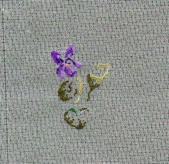 http://www.archive-host2.com/membres/images/1336321151/fleurs/Viola_gaze/fleur_1.jpg