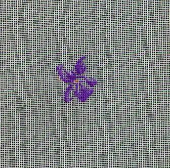 http://www.archive-host2.com/membres/images/1336321151/fleurs/Viola_gaze/fleur_2.jpg