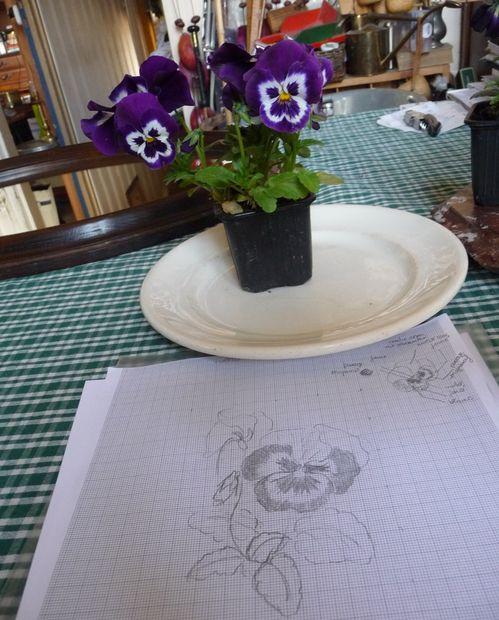 http://www.archive-host2.com/membres/images/1336321151/fleurs/Violas/A5/p-1.jpg