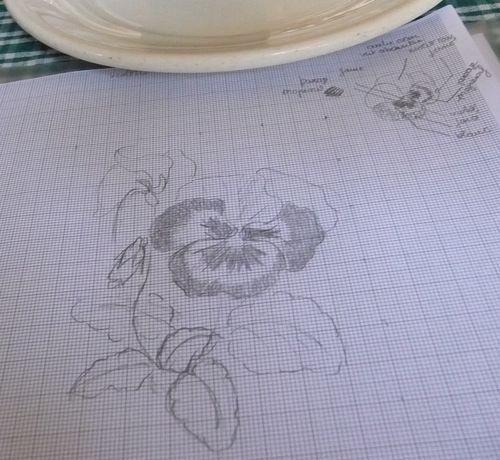 http://www.archive-host2.com/membres/images/1336321151/fleurs/Violas/A5/p-3.jpg