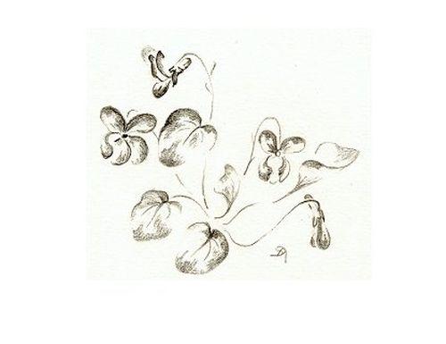 http://www.archive-host2.com/membres/images/1336321151/fleurs/Violas/DMC_AEF/viola_dessin.jpg