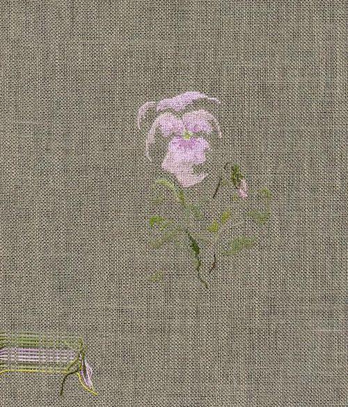 http://www.archive-host2.com/membres/images/1336321151/fleurs/Violas/Sabia_Rosa/Sabia_R.jpg