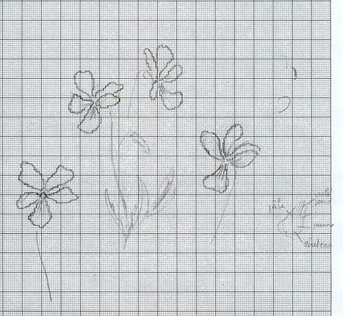 http://www.archive-host2.com/membres/images/1336321151/fleurs/Violas/canina-D.jpg