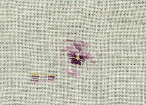 http://www.archive-host2.com/membres/images/1336321151/fleurs/Violas/de_tete/deteteB.jpg