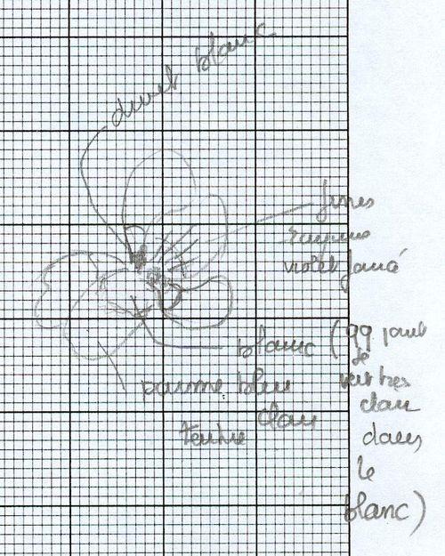 http://www.archive-host2.com/membres/images/1336321151/fleurs/Violas/elatior/Ve0_D2.jpg