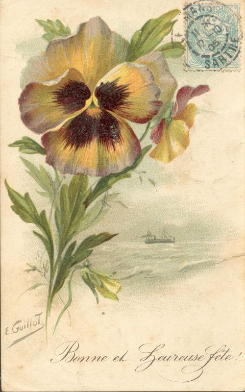http://www.archive-host2.com/membres/images/1336321151/fleurs/Violas/orange/guillot-B.jpg