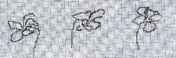 http://www.archive-host2.com/membres/images/1336321151/fleurs/Violas/ronde/dessin1-G0.jpg