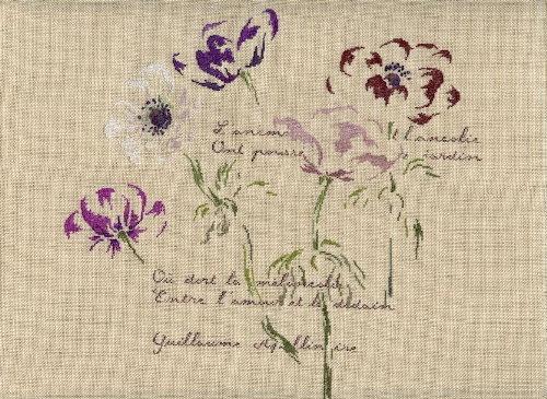 http://www.archive-host2.com/membres/images/1336321151/fleurs/anemones/anemones_B.jpg
