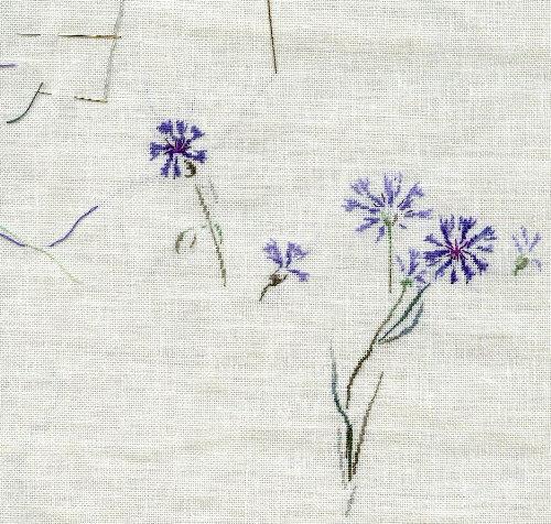 http://www.archive-host2.com/membres/images/1336321151/fleurs/bleuets/bleuet_B0.jpg