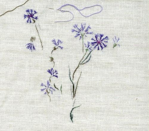 http://www.archive-host2.com/membres/images/1336321151/fleurs/bleuets/bleuet_B1.jpg