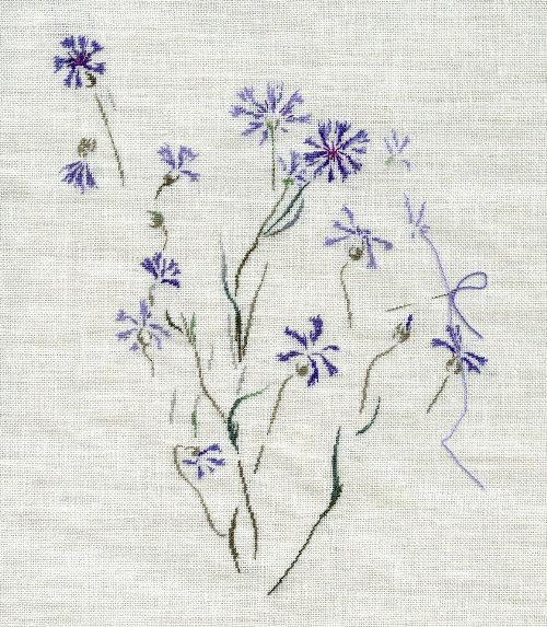 http://www.archive-host2.com/membres/images/1336321151/fleurs/bleuets/bleuet_B2.jpg