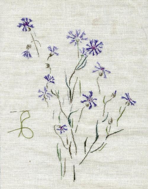 http://www.archive-host2.com/membres/images/1336321151/fleurs/bleuets/bleuet_B3.jpg