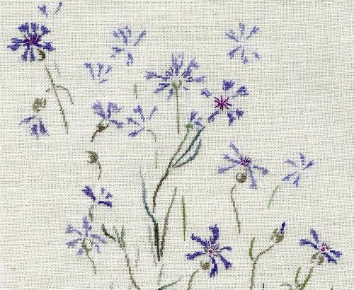 http://www.archive-host2.com/membres/images/1336321151/fleurs/bleuets/cyan_G.jpg