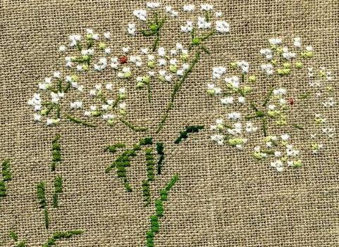 http://www.archive-host2.com/membres/images/1336321151/fleurs/carotte/cbr_blogue_fld.jpg