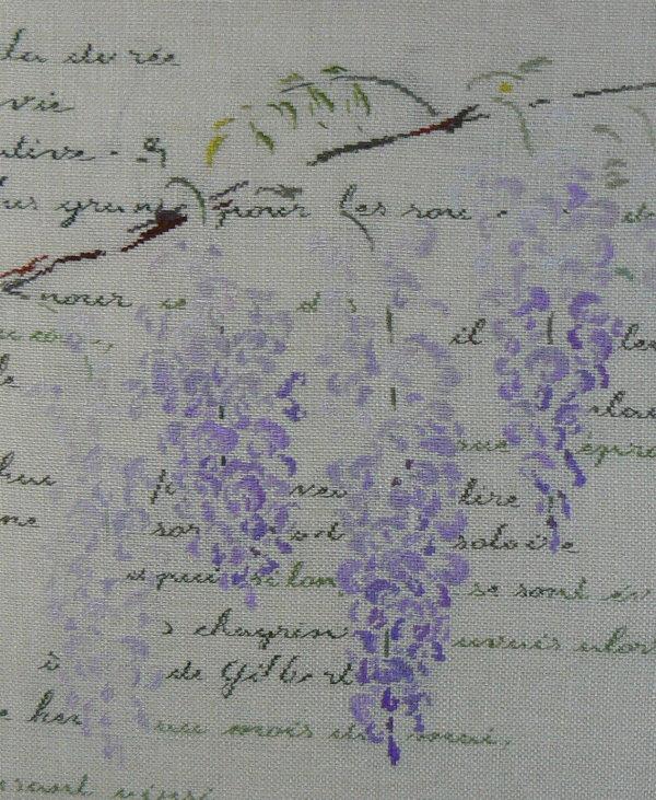 http://www.archive-host2.com/membres/images/1336321151/fleurs/glycine/gf_2.jpg