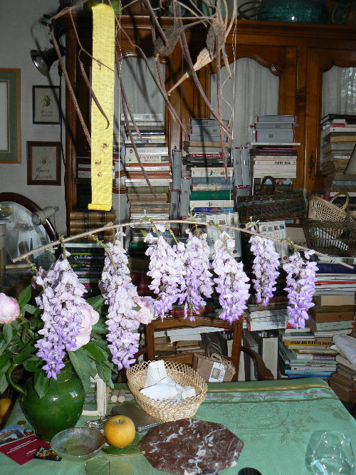 http://www.archive-host2.com/membres/images/1336321151/fleurs/glycine/gly0_branche.jpg