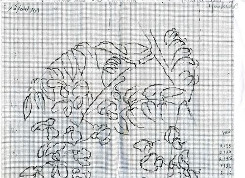 http://www.archive-host2.com/membres/images/1336321151/fleurs/glycine/rose/gr-Dh.jpg