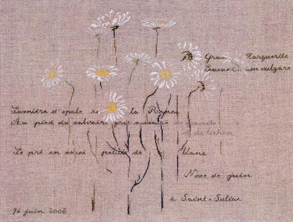 http://www.archive-host2.com/membres/images/1336321151/fleurs/marguerites/MNB.jpg