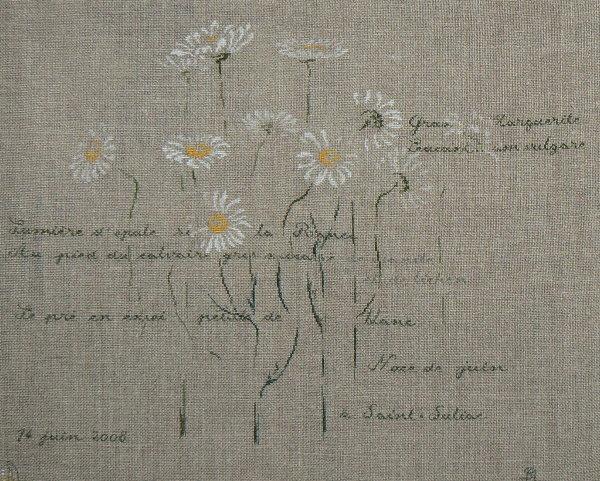 http://www.archive-host2.com/membres/images/1336321151/fleurs/marguerites/marguerite0.jpg
