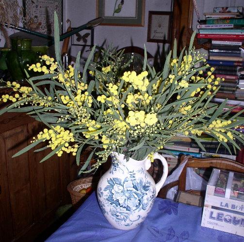 http://www.archive-host2.com/membres/images/1336321151/fleurs/mimosa/abc_mim.jpg