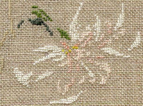 http://www.archive-host2.com/membres/images/1336321151/fleurs/narcisses/Palmares/palmares_g.jpg