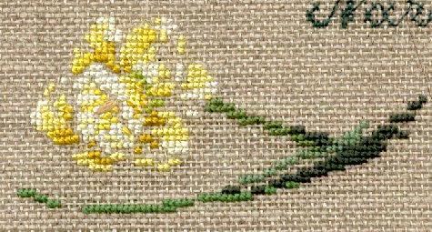 http://www.archive-host2.com/membres/images/1336321151/fleurs/narcisses/Saint-Patrick/saint_patrick_g.jpg