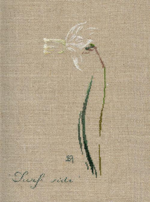 http://www.archive-host2.com/membres/images/1336321151/fleurs/narcisses/Surf_side/surf_side.jpg