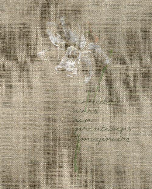 http://www.archive-host2.com/membres/images/1336321151/fleurs/narcisses/blanc_detete/bdt-1.jpg